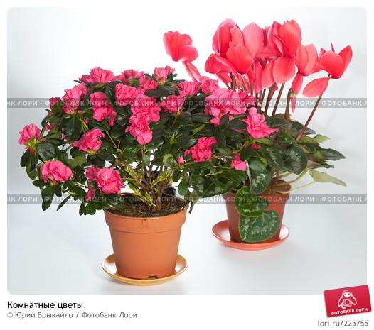 Цветущие комнатные цветы каталог